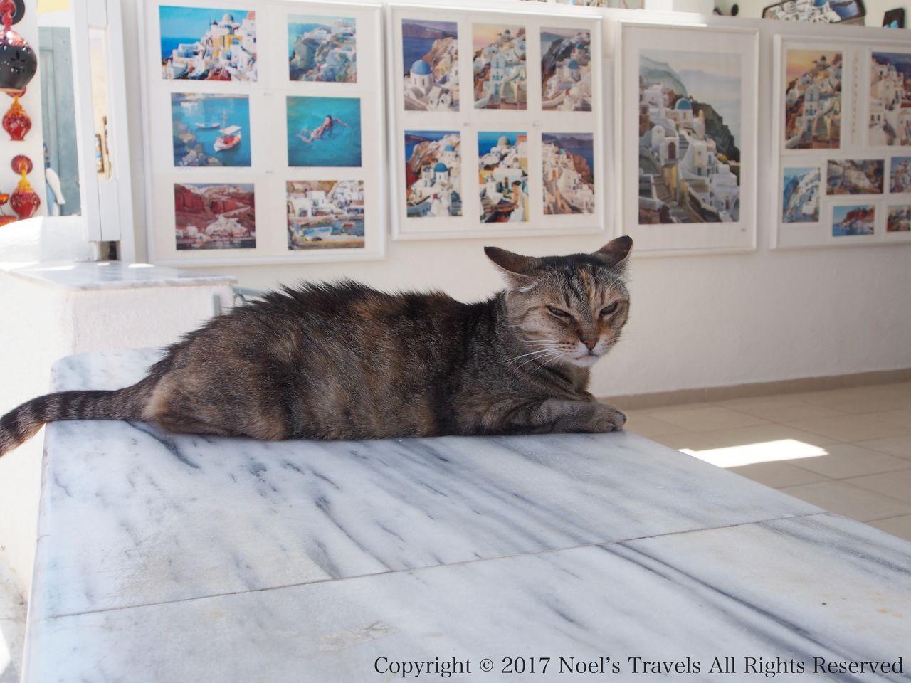 サントリーニ島の猫