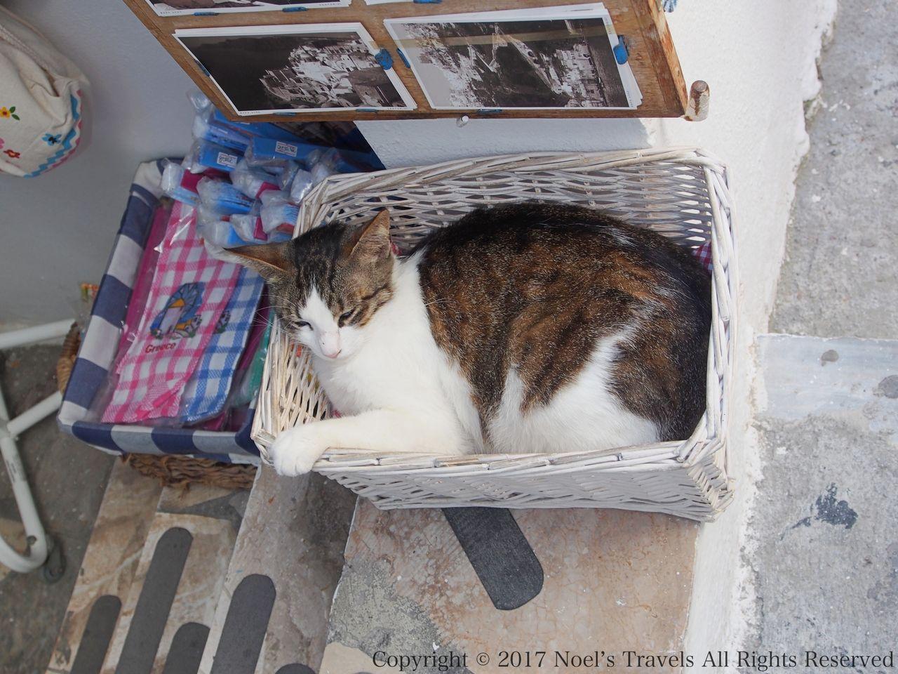 サントリーニ島のネコ